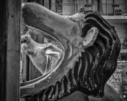 Location, Chelsea - More whimsy. There was some kind of carnival truck parked on the street. I walked past and was riveted when I saw the elephant head inside the lions mouth. Just a nice fun shot but again, there is a strong sense of geometry and repeating patterns to reinforce and create a strong image.